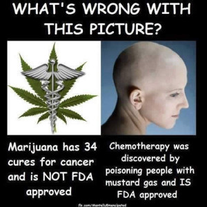 Marijuana Cancer Quotes images