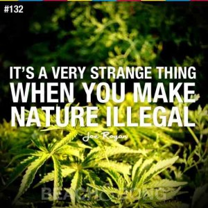 Quotes about Illegal Marijuana IMage