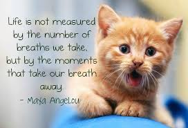 Really Cute Life Quotes Maya Angelou Pictures