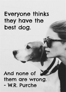 Best Dog Quotes with Images
