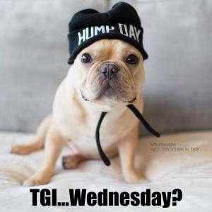 50+ Kickass Funny Wednesday Memes to Make Hump Day Better