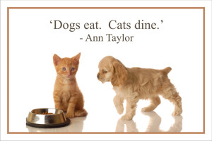 Cute Quotes about Dogs and Cats with Images