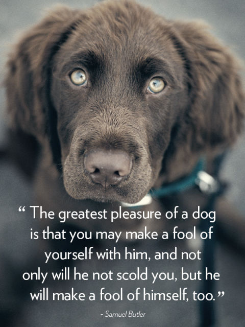 100+ Best Quotes About Dogs & Famous Dog Quotes