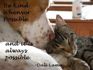 Dog and Cat Picture Quotes images