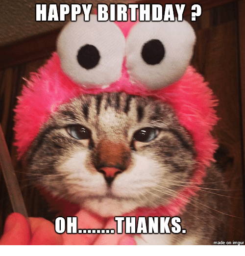 100 Best Happy Birthday Cat Memes & Images
