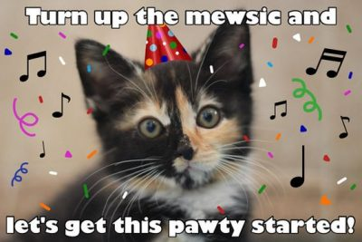 Hilarious Cat Memes for Birthdays