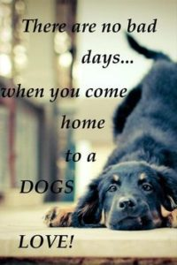 Quotes about Dog Lovers