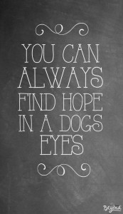 Quotes about Dog and Hope Images