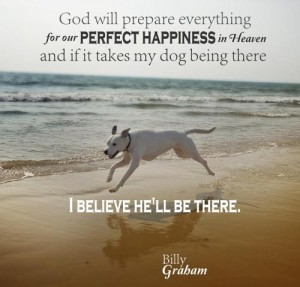 Quotes about Dogs and God Images
