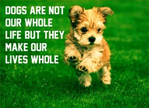 Quotes about Dogs being Family HD Wallpaper Images