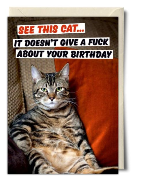 100 Best Happy Birthday Cat Memes Images