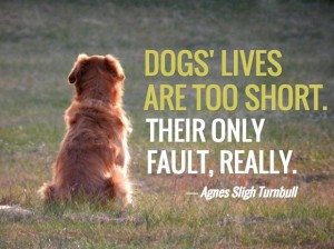 Short Quotes about Dogs Images