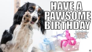 funny happy birthday memes dogs