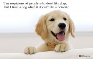 quotes about dogs and their owners
