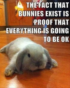 Encouraging bunny meme