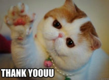 Sweet Thank You meme CAT