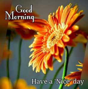 Awesome Good Morning Wishes for Friends