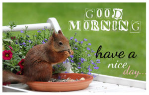 Cute good morning wishes