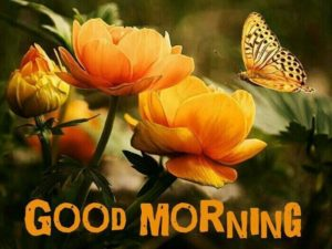 Good Morning Wish for Family