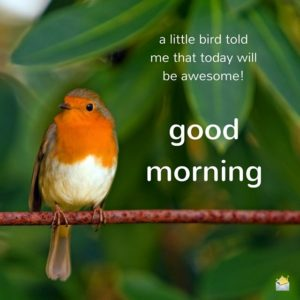Good Morning Wishes Birds