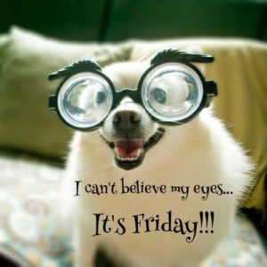 Happy Friday Quotes Animals