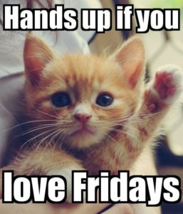 Happy Friday Quotes Cat