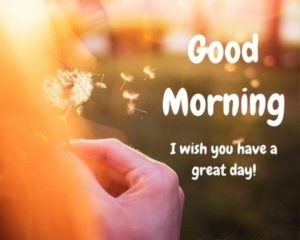 good morning wishes good day