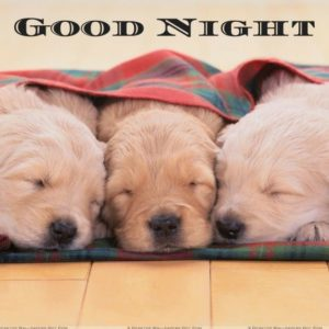 Cute Good Night Dog Images