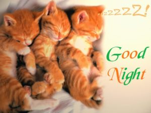 CuteGood Night Images HD