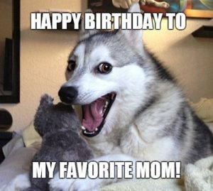 Happy Birthday Dog Meme Mom