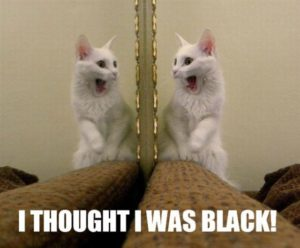 Cute White Cat Meme Images