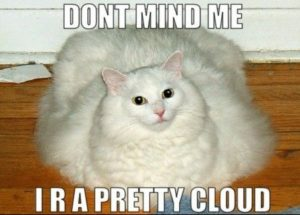 Fat White Cat Meme