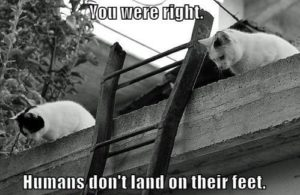 Hilarious White Cat Meme