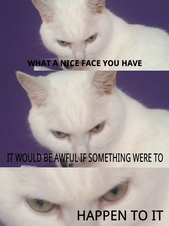 70+ Most Hilarious White Cat Meme & Funny White Cat Images