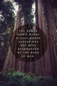 Deep Quotes about Nature and Life