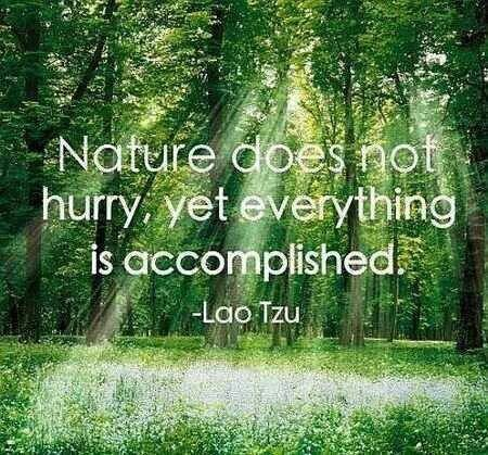55 Most Beautiful Quotes About Nature And Life