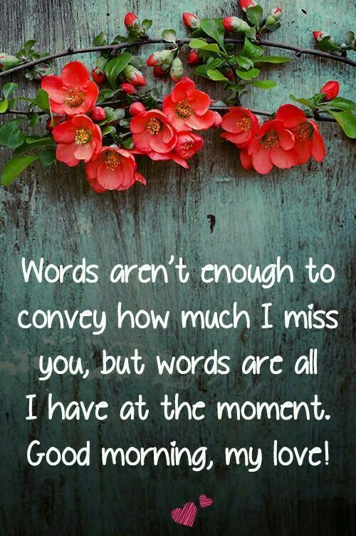 100+ Most Romantic Good Morning My Love Quotes & Images