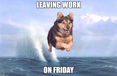 Friday Work Dog Meme