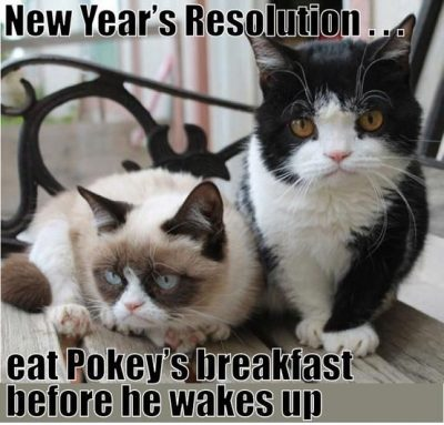 Cute Cat New Year's Resolution Meme