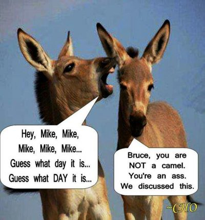 Donkey Hump Day Meme