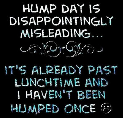 Hump Day Meme Diety