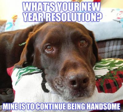 New Year Dog Meme