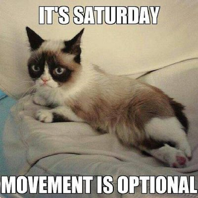 Saturday Cat Memes