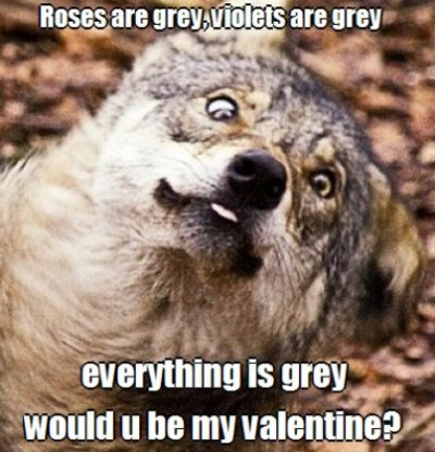 Animal Valentine Day's Meme