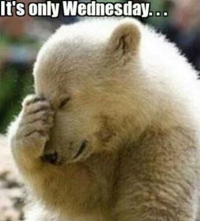 Cute Bear Wednesday Memes