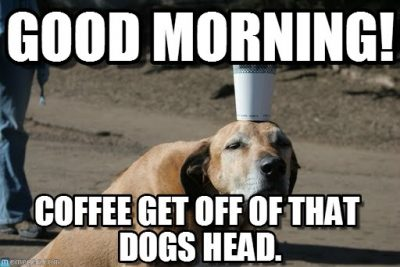 Good Morning Dog & Coffee Memes