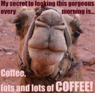 Humorous Wednesday Coffee Meme