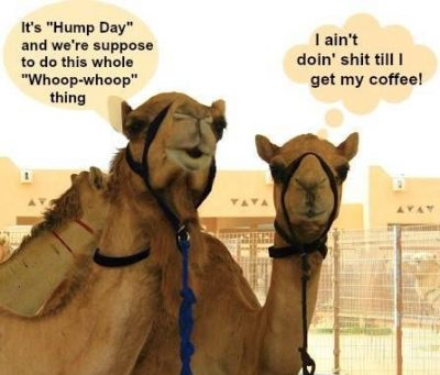 Hump Day Coffee Meme