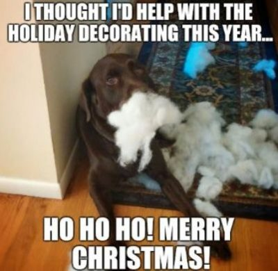 Dog Memes For Christmas