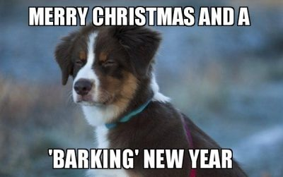 Merry Christmas to Your Dog
